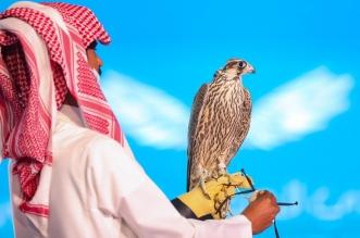 237 ألف ريال حصيلة اليوم الـ15 لمزاد نادي الصقور السعودي - المواطن