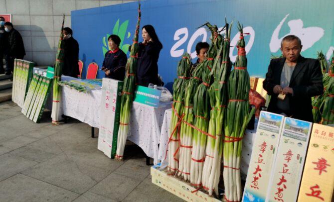 البصل الصيني في موسوعة غينيس بطول 2.53 متر