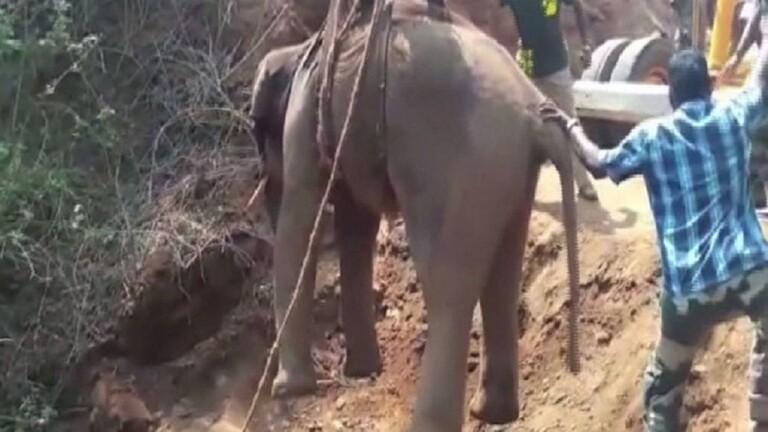فيديو.. 14 ساعة لانتشال فيل من بئر عميقة بالهند