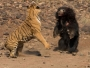 نمر ودب