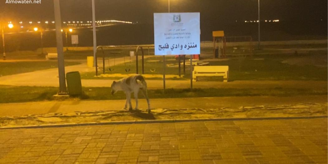 فيديو.. الكلاب الضالة تزاحم المواطنين في أكبر منتزهات حفر الباطن!