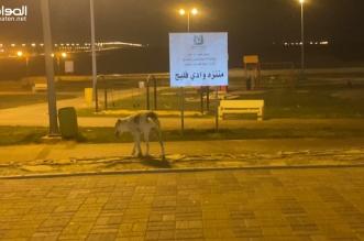 فيديو.. الكلاب الضالة تزاحم المواطنين في أكبر منتزهات حفر الباطن! - المواطن