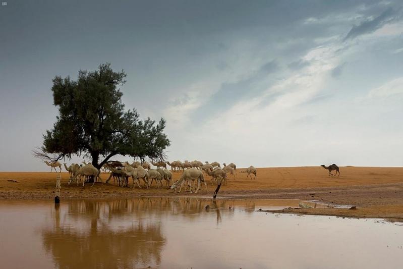 صور جوية تظهر جمال القصيم بعد الأمطار