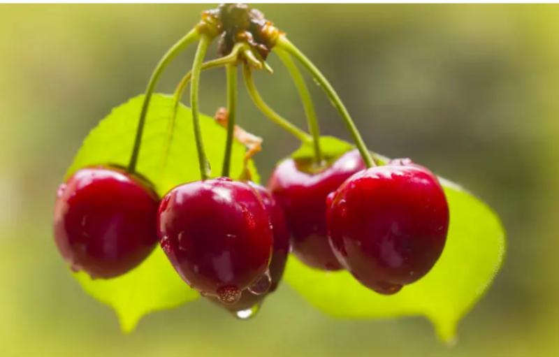 تعرف على أهم الأطعمة المفيدة للبنكرياس.. الثوم أبرزها 8