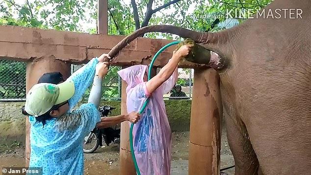 فيديو.. شاهد ما فعله هذا الفيل مع الطبيب البيطري