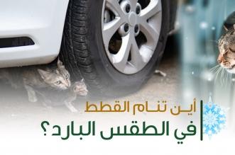 البيئة تحذر: تأكدوا من عدم وجود قطط تحت غطاء المحرك أو السيارة - المواطن