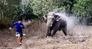 لحظات مخيفة .. فيل بري يطارد موظفي الغابة ويكاد أن يقتلهم