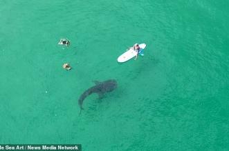 فيديو .. لحظات مذهلة لقرش الحوت وهو يسبح بسلام مع رواد أحد الشواطئ - المواطن