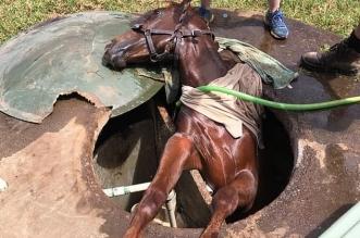 انقاذ حصان