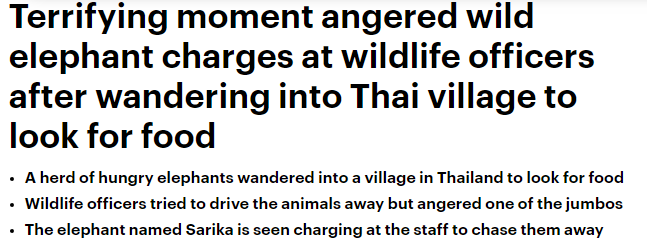 لحظات مخيفة .. فيل بري يطارد موظفي الغابة ويكاد أن يقتلهم - المواطن