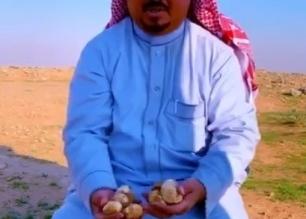 فيديو.. بشائر الفقع تظهر شرق رفحاء - المواطن
