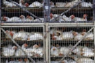 إغلاق حراج الطيور والخردة بمكة ضمن الإجراءات الاحترازية - المواطن