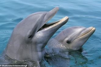 الدلافين لها صفات مشابهة للإنسان