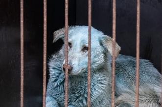 الكلاب تتحول للون الوردي والأزرق في روسيا فما السبب؟