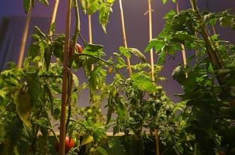 لقطات من جناح الضوء البيئي في معرض نور على نور - المواطن