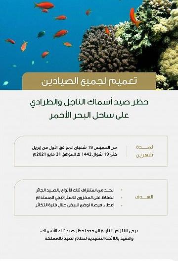البيئة تحظر صيد أسماك الناجل والطرادي لمدة شهرين