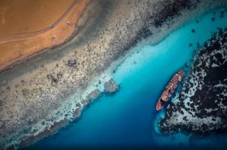 صحيفة هندية السعودية تلعب دورًا كبيرًا في حل القضايا البيئية الملحة (3)