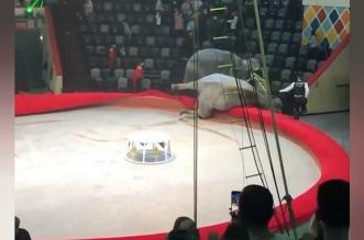 فيديو.. معركة شرسة بين فيلين يُثير هلع الجمهور والسبب كورونا - المواطن