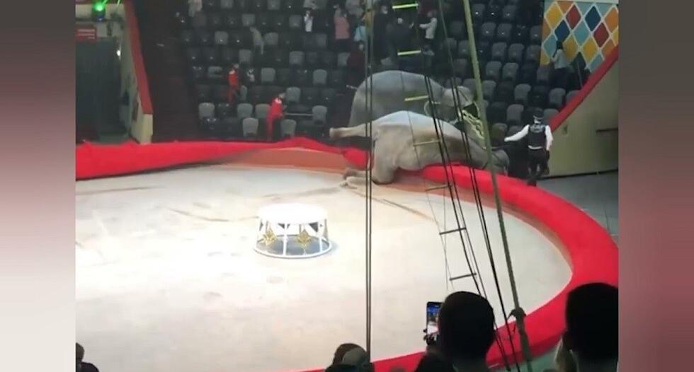 فيديو.. معركة شرسة بين فيلين يُثير هلع الجمهور والسبب كورونا