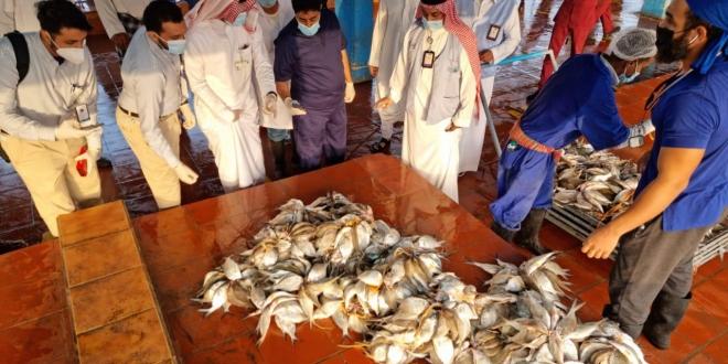 مصادرة وإتلاف 644 كجم أسماك فاسدة بالسوق المركزي بجدة - المواطن