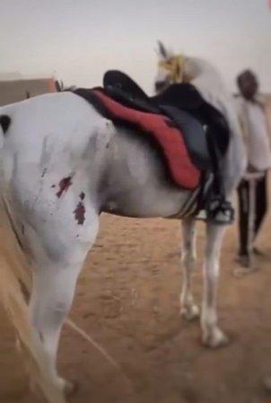 ضبط مواطن بجدة تباهى بالاعتداء على خيل محدثًا إصابات على جسده
