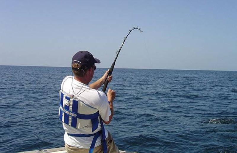ما الفرق بين أسماك الناجل والطرادي؟