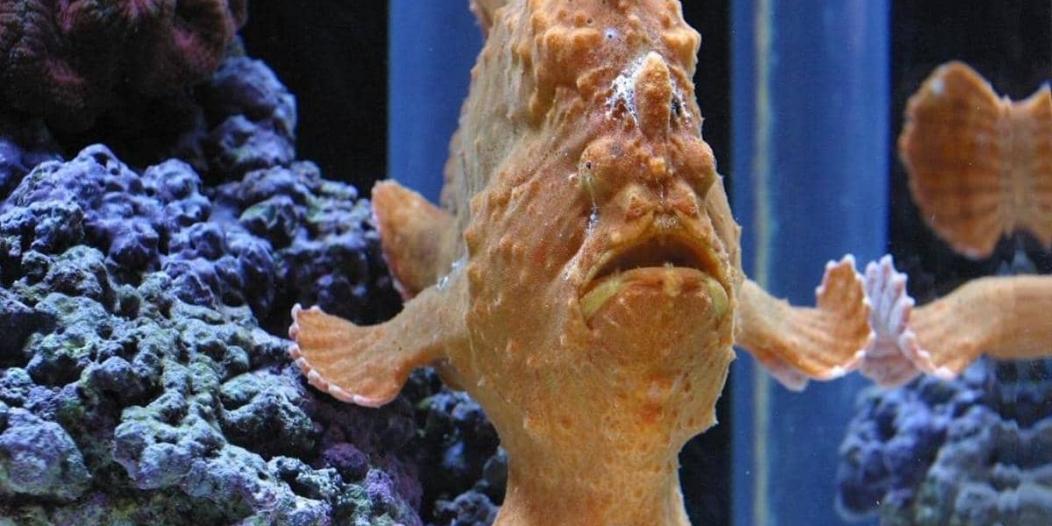 فيديو يوثق وجود أسماك بشعر وأرجل !