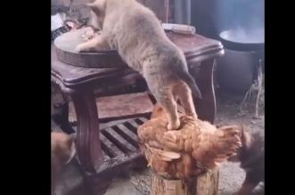 آبي أحمد ينشر فيديو عن دجاجة وكلب.. ماذا يقصد ؟ - المواطن