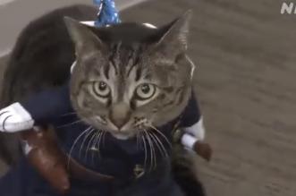 تكريم قطة في اليابان