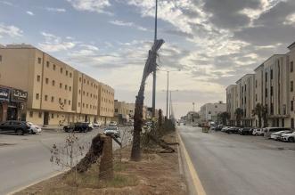 نخل الرياض يموت على أرصفتها بسبب الإهمال.. ومغردون يوجهون رسالة لـ البلديات - المواطن