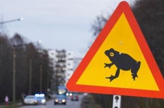 إغلاق طريق رئيسي في العاصمة الإستونية بسبب الضفادع - المواطن
