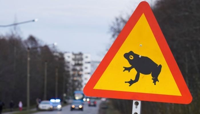 إغلاق طريق رئيسي في العاصمة الإستونية بسبب الضفادع