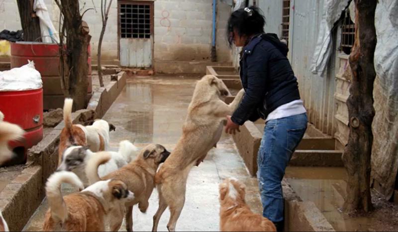 اكتشاف نوع جديد من كورونا ينتقل إلى البشر من الكلاب