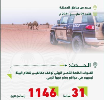 الأمن البيئي يوقف 31 مخالفًا لنظام البيئة بينهم 18 مواطنًا