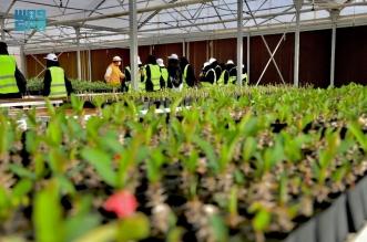 شركة البحر الأحمر استزراع 15 مليون نبتة وشتلة لإثراء الغطاء النباتي في المشروع
