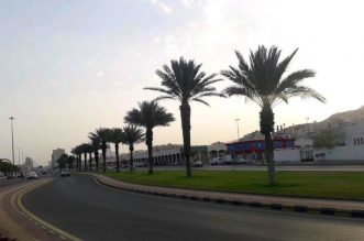 أمانة العاصمة المقدسة تزرع 3 آلاف شتلة بطريق المسجد الحرام - المواطن
