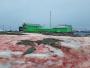 الجليد الدامي ظاهرة جديدة تثير الحيرة والقلق