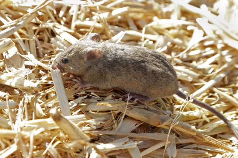 فئران تغزو سجنًا وتحرر المعتقلين