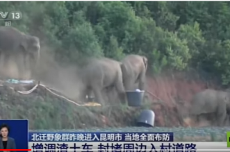 قطيع فيلة شاردة