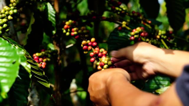 كارثة في البرازيل قد تحرمك من فنجان القهوة والسكر