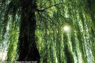 هل يمكن أن ينتشر فيروس كورونا عن طريق الأشجار؟