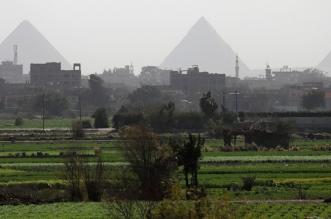 مصر تنجح في زراعة محصول الأول من نوعه لمواجهة أزمة المياه - المواطن