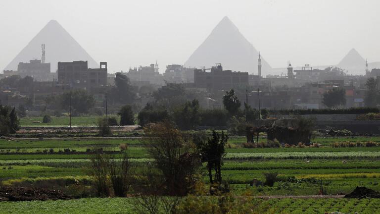 مصر تنجح في زراعة محصول الأول من نوعه لمواجهة أزمة المياه