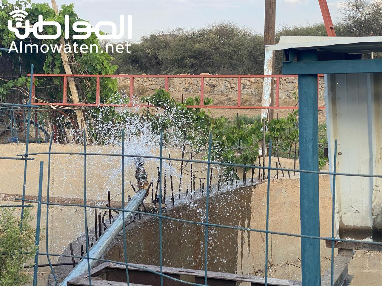 مزرعة بن شابل الريفية تستقبل وفدًا إعلاميًا في أحد رفيدة - المواطن