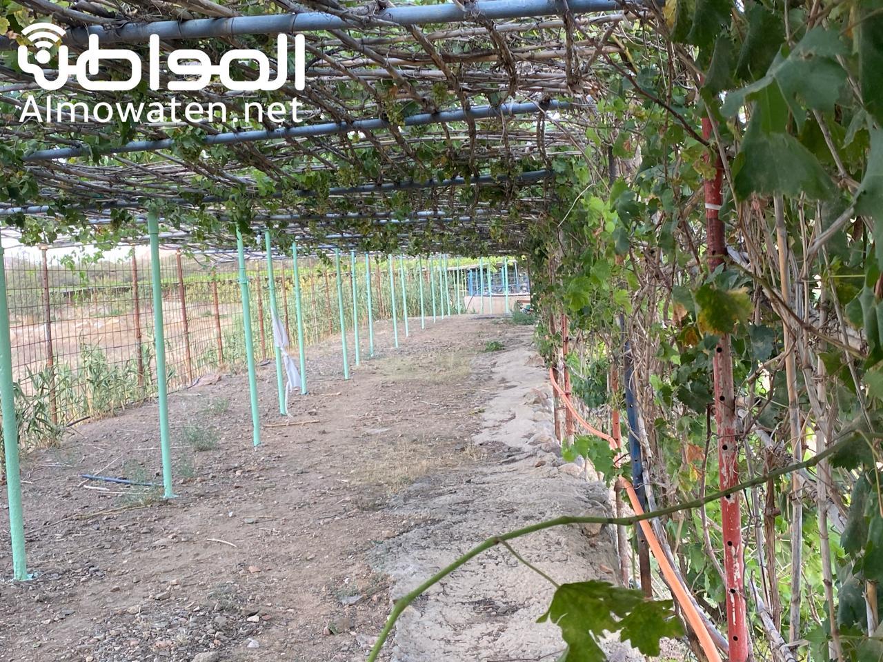 بيوت تراثية ومزارع متنوعة في مزرعة بن شابل الريفية