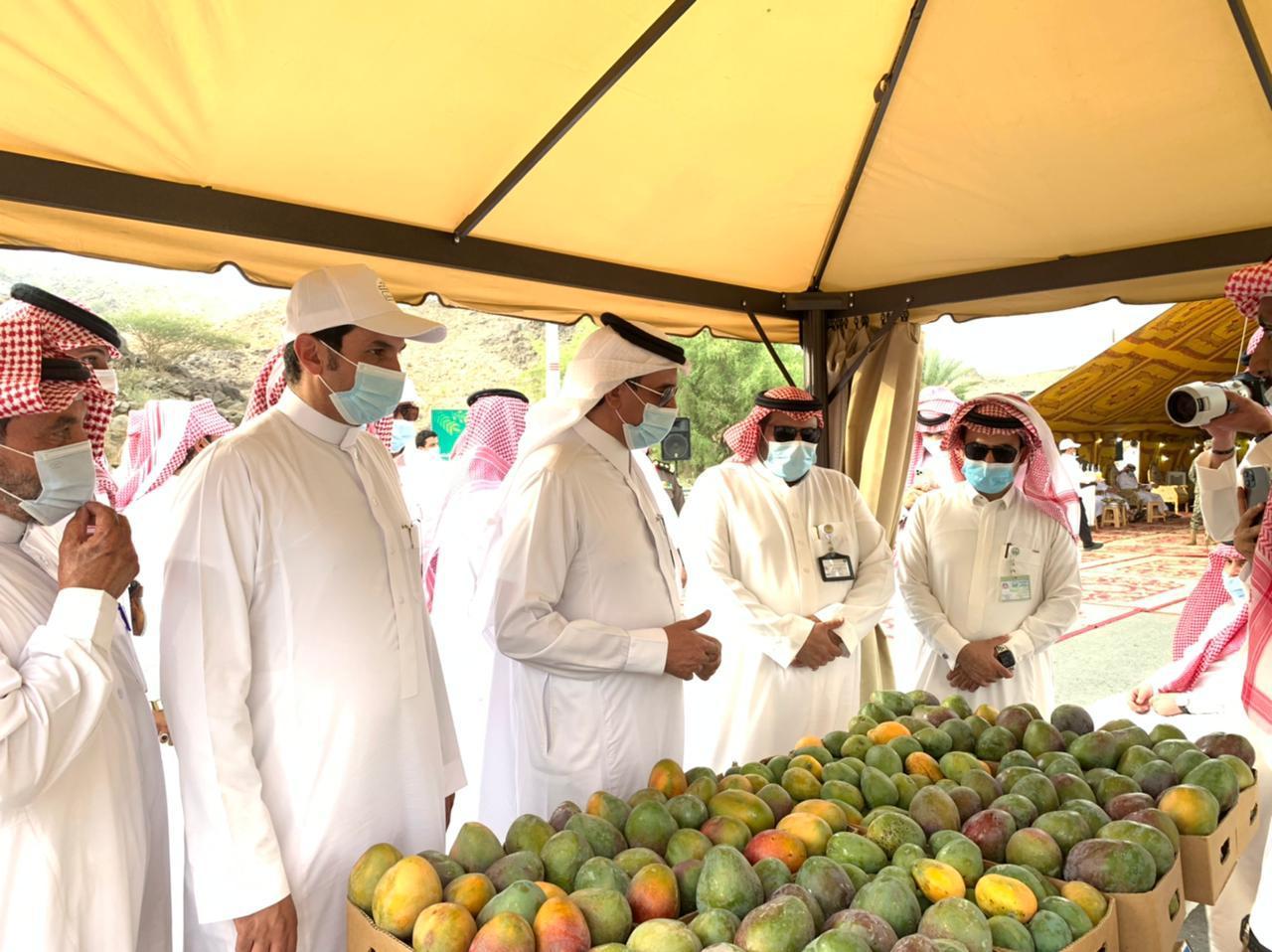 انطلاق المهرجان الأول للمانجو بمركز الفرشة في محافظة سراة عبيدة