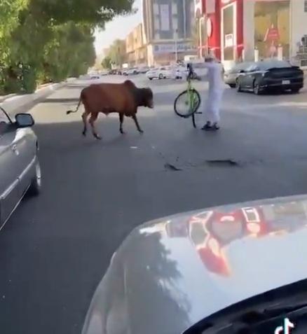 ثور يتجول في شوارع جدة ويهاجم المارة