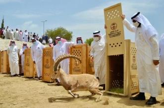 إمارة الباحة تحذر العابثين بمقدرات الحياة الفطرية: العقاب رادع - المواطن