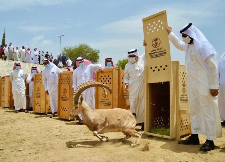 إمارة الباحة تحذر العابثين بمقدرات الحياة الفطرية: العقاب رادع
