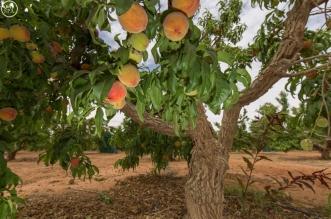 الزراعة تطلق حملة جربها في موسمها : الخير والنماء يملأ ربوع الوطن - المواطن